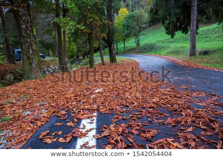 Pathway in the forest full of fallen dried leaves.  Road to a be Stock photo © dacasdo