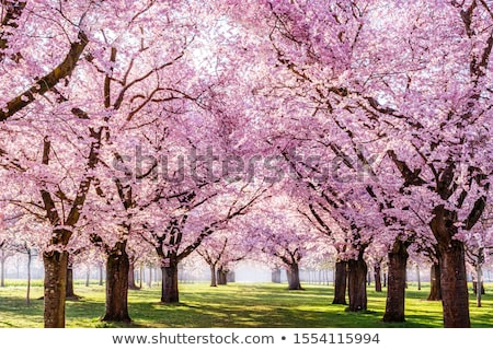 garden with blossoming tree and flowers stock photo © neirfy
