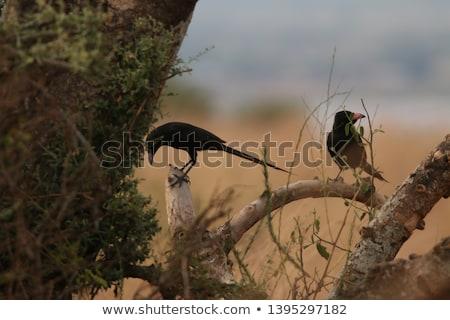 Jeugdig permanente grasachtig veld vogel jonge Stockfoto © davemontreuil