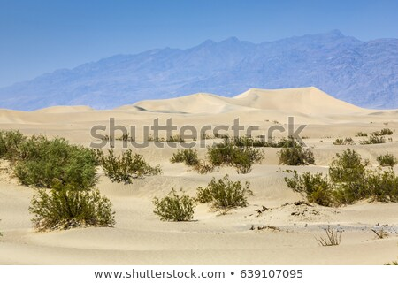 dried desert gras in Mesquite Flats Sand Dunes in the northern p Stock photo © meinzahn