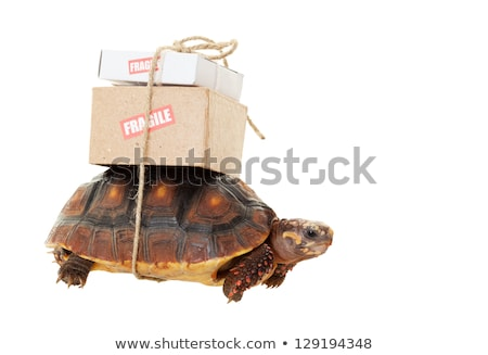 Tortoise Slow Mail Stock photo © songbird
