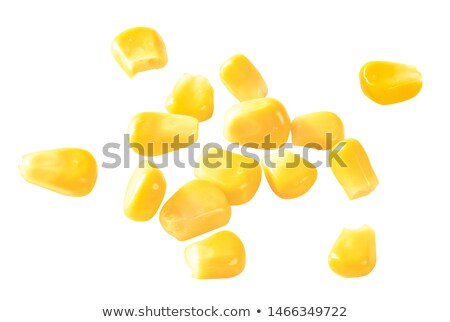 Corn ear isolated on white Stock photo © m_pavlov