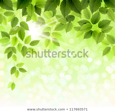 abstract green leaves eco vector banners with copy space stock photo © lenapix