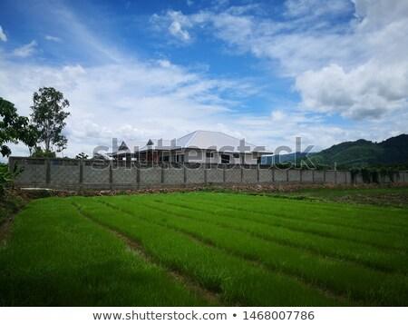 gebouw · aarde · kraan · geïsoleerd · witte - stockfoto © nalinratphi