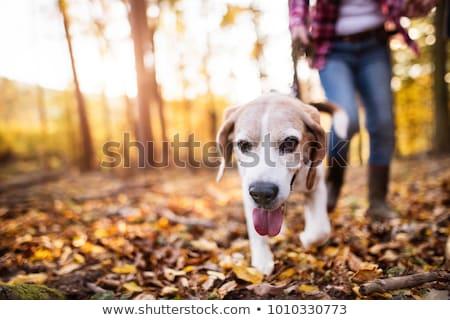 Dog walking in forest Stock photo © ivonnewierink