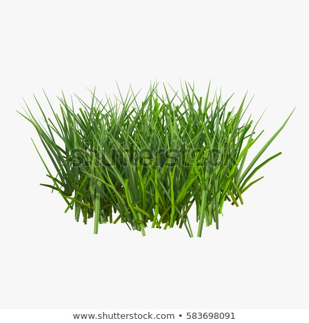 grass on white background. Isolated 3D image stock photo © ISerg