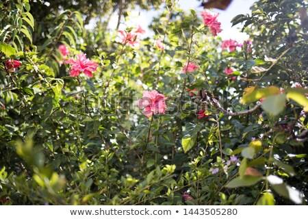 中国語 庭園 美しい ウィンドウ 竹 苔 ストックフォト © craig