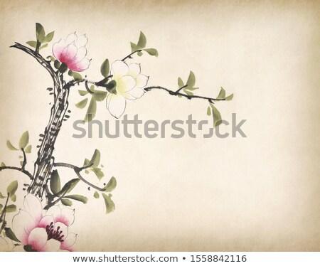 Starego papieru magnolia starożytnych kawałek trzy kwiaty Zdjęcia stock © fyletto