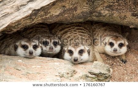 Vadállatok barlang illusztráció erdő természet tájkép Stock fotó © colematt