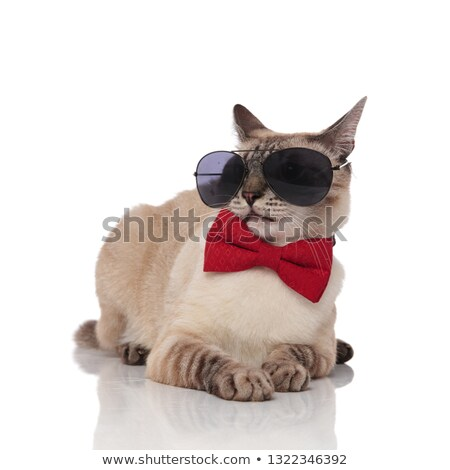 funny elegant burmese cat wearing sunglasses looks to side Stock photo © feedough