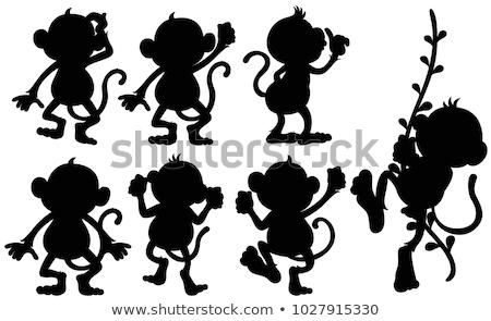 силуэта Обезьяны различный позиции иллюстрация фон Сток-фото © colematt