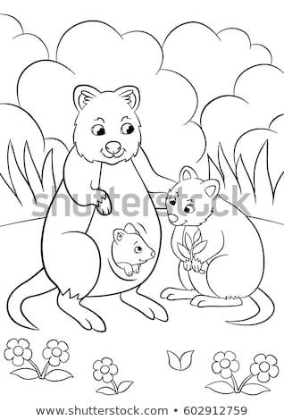 Quokka Drawing Color Stock photo © patrimonio