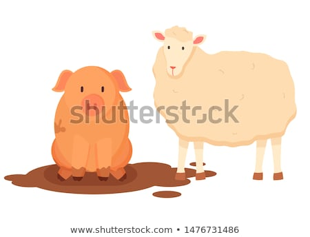 Sheep with Wool and Pig Sitting in Dirt Vector Stock photo © robuart