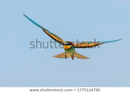 Bee eater in the sky Stock photo © Anna_Om