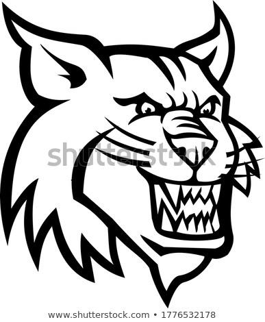 Angry Bobcat or Canadian Lynx Head Mascot Black and White Stock photo © patrimonio