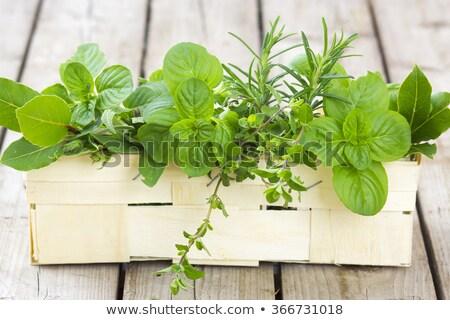 Fresh basil herb in basket Stock photo © karandaev