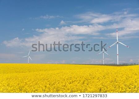 Turbina eólica campo pecado natureza verão eletricidade Foto stock © guffoto