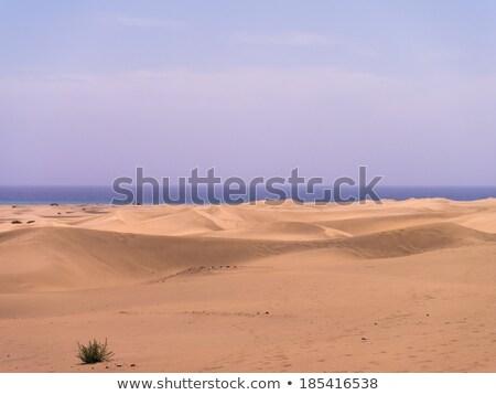 Huge sand dunes in Gran Canaria Stock photo © Hofmeester