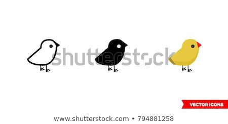 куриного · голубя · стороны · Перу · яйца · крыльями - Сток-фото © Armisael