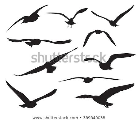 sziluett · sirály · háttér · madár · fekete · szabadság - stock fotó © perysty