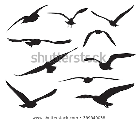 Siluet martı arka plan kuş siyah özgürlük Stok fotoğraf © perysty