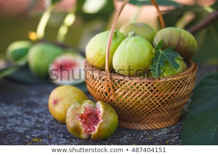 basket of figs in the garden Stock photo © marimorena