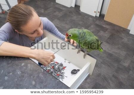 смешные · Parrot · работник · изолированный · белый - Сток-фото © RAStudio
