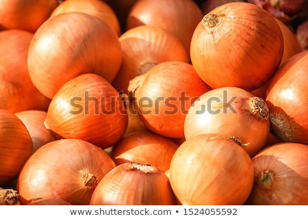 onions detail Stock photo © Marcogovel
