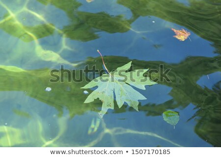 bladeren · stream · stenen · boom · natuur · landschap - stockfoto © michey