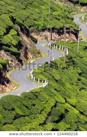 winding road between tea plantations Stock photo © Mikko