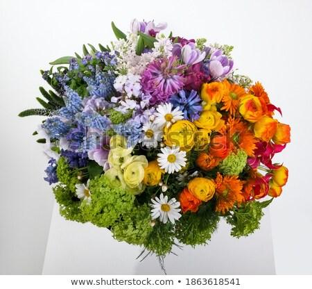 Hombre jardinería rojo verde cubo flores de primavera Foto stock © compuinfoto