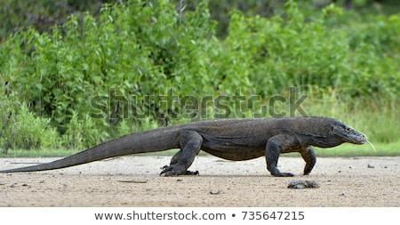 панорамный · крокодила · спальный · голову · другой - Сток-фото © vwalakte