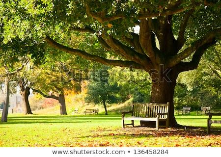 穏やかな 公園 ベンチ 木製 日光 木 ストックフォト © Sportlibrary