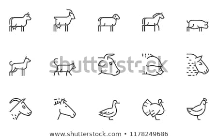 animaux · de · compagnie · animaux · de · la · ferme · icônes · poissons · chat · cheval - photo stock © carbouval