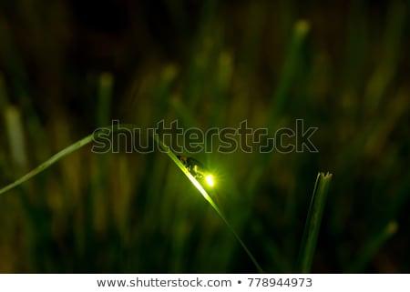 Luciole lumière cartoon up nuit ailes Photo stock © blamb