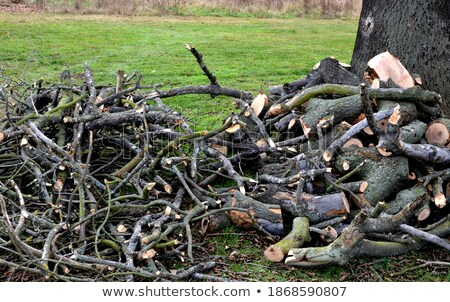 Shelter of branches and fireplace Stock photo © Alegria111