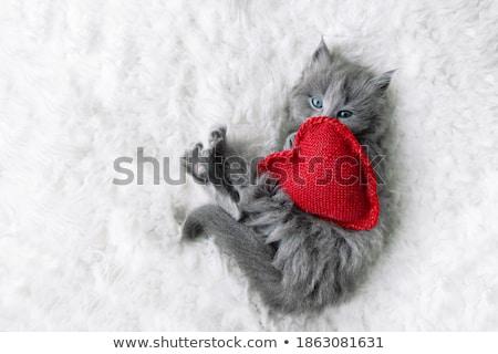 Küçük kırmızı kedi yavrusu oturma yastık huzurlu Stok fotoğraf © ryhor