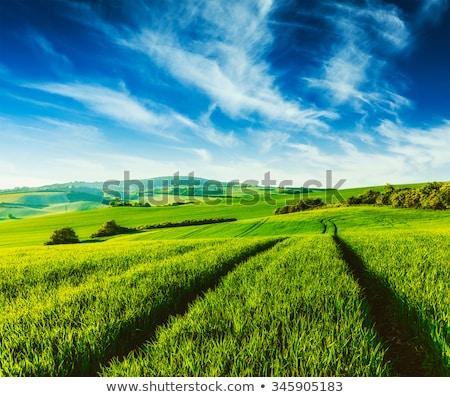 Zielona trawa Błękitne niebo vintage w stylu retro piękna krajobraz Zdjęcia stock © Mikko