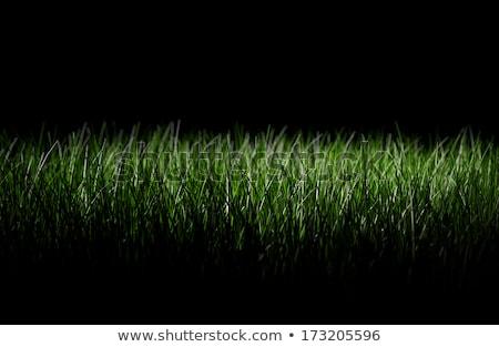 black background with grass stock photo © adamson