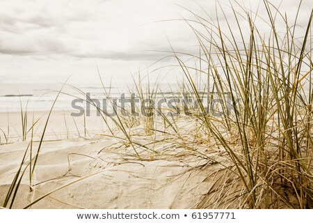 grass on a beach during stormy season Stock photo © meinzahn