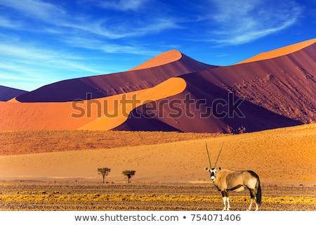 çöl · Namibya · Afrika · kum · gökyüzü · park - stok fotoğraf © imagex
