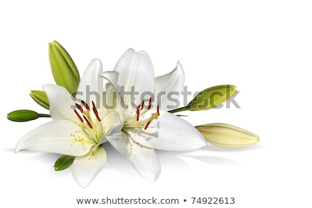 Clusters of white flowers  Stock photo © vavlt