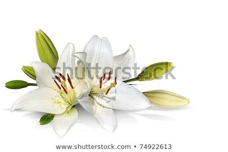 白い花 茂み 夏 空 ツリー ストックフォト © vavlt