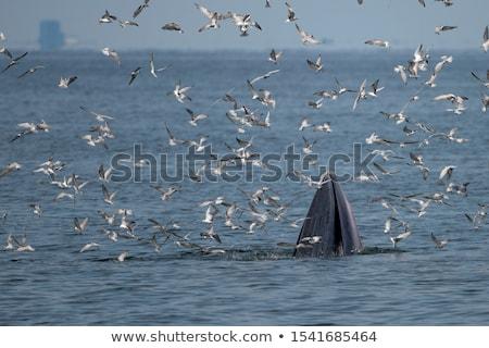 Sirály eszik hal fej halott móló Stock fotó © smithore