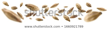 malt grains Stock photo © olira