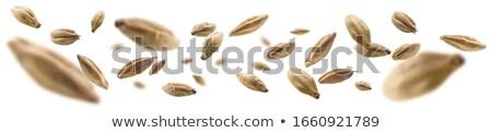 malt grains stock photo © olira