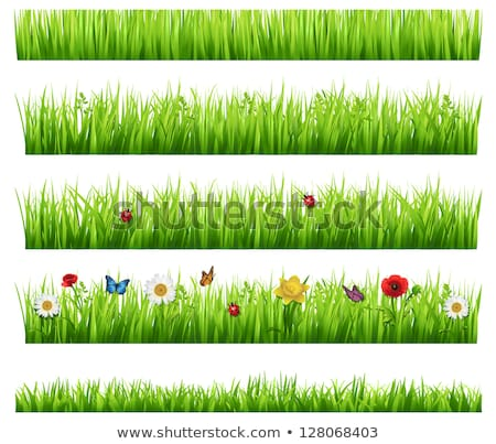printemps · herbe · coccinelle · fond · été · drôle - photo stock © alinbrotea