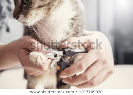 pet nail clippers stock photo © stocksnapper