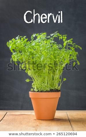 hortelã-pimenta · argila · pote · escuro · comida · madeira - foto stock © zerbor