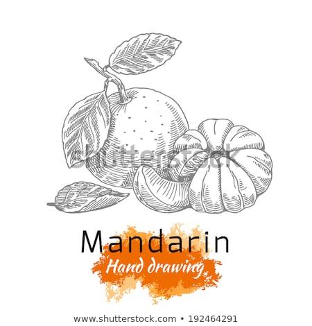 иллюстрация · мандарин · рисунок · стороны · продовольствие · фрукты - Сток-фото © artibelka